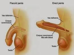 jual obat herbal alami memperbesar dan memanjangkan alat vital pria