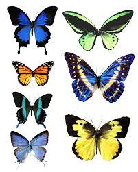 butterfly print out wallpaper download cucumberpress com