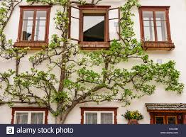 building in hallstatt austria stock photo royalty free image