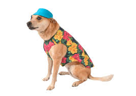 Halloween Costume Dog Halloween Costumes Pets Newsday