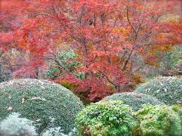 Different Types Of Japanese Gardens - japanese maples at autumn u0027s end deb u0027s garden deb u0027s garden blog