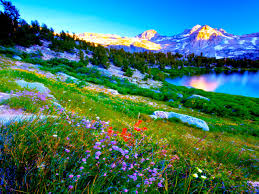 Flower Field Wallpaper - flower spring wild nature hills mountains lake flowers field