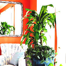 house plants that don t need light coolest house plants small that dont need sun best large uk low