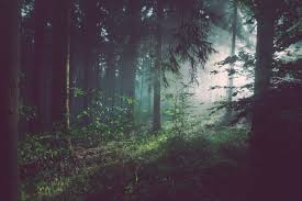 forest images Living near a forest is linked to better brain health pacific jpg