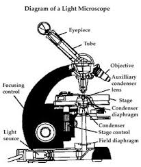 compound light microscope uses compound light microscope drawing at getdrawings com free for