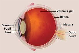 Facts About Age Related Macular Degeneration National Eye Institute