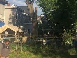 tree falls on man during backyard barbecue causing fatal injuries