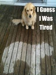 Tired Dog Meme - the top 100 dog memes of 2017 pro pooch