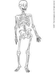 human skeleton coloring book u2013 defenderauto info