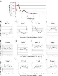 In Ex by 12 H Rhythmic Transcription Is Dampened In Ex Vivo Figure 6 Of 11