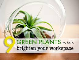desk plant air purifier photos hd moksedesign