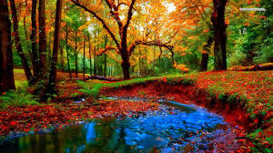 fantasy autumn wallpaper forest enchanted forest colorful splendor colors magnificent