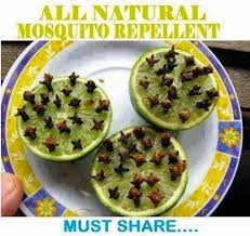 natural mosquito repellents move it and lose it natural mosquito repellent