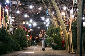 a peek behind the curtain at new york u0027s christmas tree trade