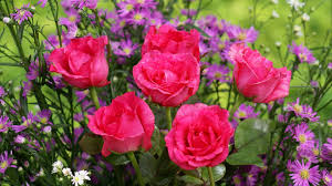 25 best hd flowers ideas on pinterest lotus flowers lotus