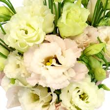 lisianthus flower lisianthus flower for october to may delivery