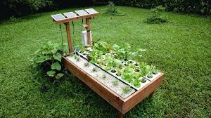 container gardening in hawaii kathy oshiro home vegetable