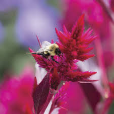 Flowers Bees Pollinate - plant flower seeds for bees and pollinators