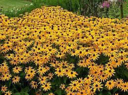 191 best perennials images on pinterest flower gardening