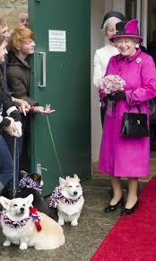 queen elizabeth dog queen elizabeth and her corgis 11 facts to know hello us