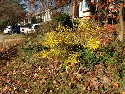 native plants in maryland fall
