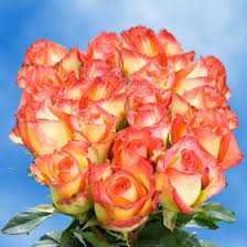 konfetti roses 250 wholesale flowers