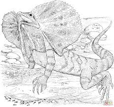 desert lizard coloring page dragon lizard coloring pages preschool in fancy frilled lizard