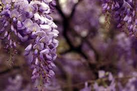 free images nature branch blossom leaf flower purple petal