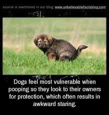 Funny Memes App - get the 1 meme app dogs pinterest meme dog and funny gifs