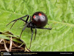 bartender resume template australia zoo expeditions maui to molokai black widow spider teensy weensy spider pinterest spider