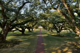 new orleans day trip 2 oak alley plantation tracie travels
