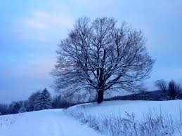 my tree wanderlust