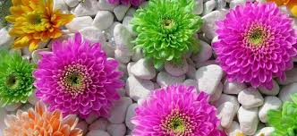 send flower italy florist send flowers italy flowers italy