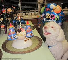 riley the smiling dog celebrates birthday with toothy grin and