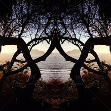 finding fractals in nature particularly in gorgeous trees like