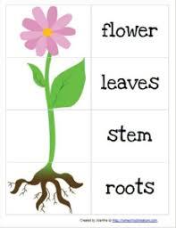 plant worksheet worksheets