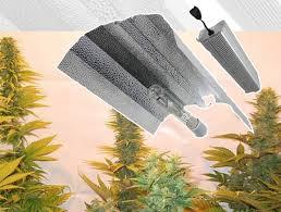 proper lights for growing weed beginners growing marijuana indoors