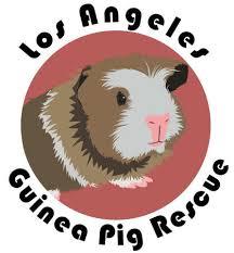playmobil 4794 special u2013 4 guinea pigs