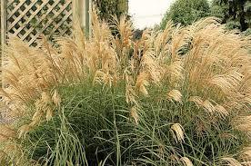 top 10 year round perennials year round plants birds u0026 blooms