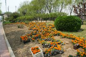 Backyard Flower Bed Designs Free Images Tree Plant Lawn Backyard Soil Botany Flowers
