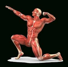 all parts of the muscular system presentation name on emaze