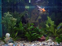 file home aquarium jpg wikimedia commons