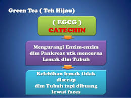 Teh Oyama oyama tea anti oksidant