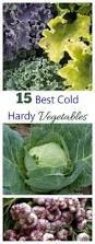 best 25 winter crops ideas on pinterest winter vegetable