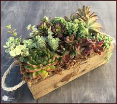 succulent planters for sale order succulent gifts the succulent eclectic