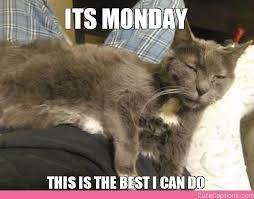 Tired Cat Meme - its monday this is the best i can do cute captions books