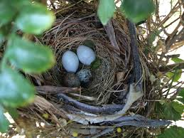 what birds eggs are these two different looking types in same