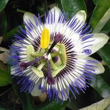 flower seeds annual u0026 perennial flowers vegetable seeds herb