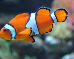 picture fish cool coloring design gal 7304 unknown