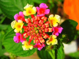 spectacular gingers u0026 other amazing exotic plants rare plants flowers of the blue planet exotic flowers tattoo n u0027 piercings